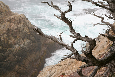 Cypress branches above the tidal surf.