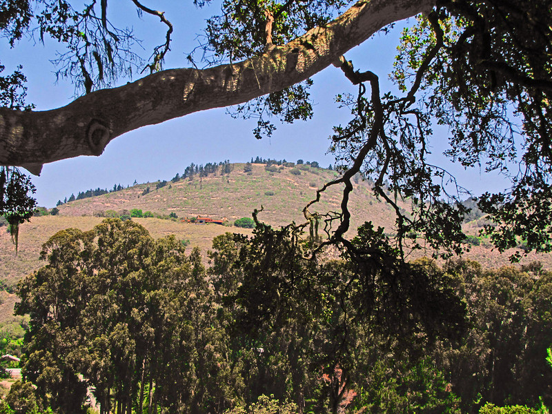 North slope, Carmel Valley