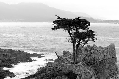 The Lone Cypress Pebble Beach, CA