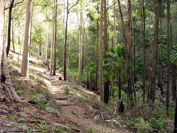 The walking track to Mickey Creek Gorge.