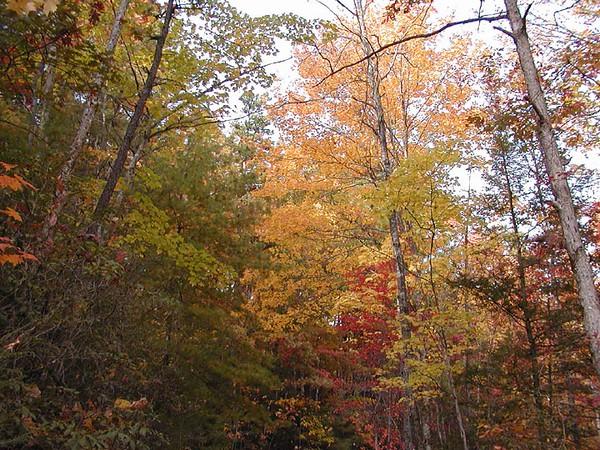 Colors of Autumn along Auger Hole Road<br /> Gorges State Park, NC