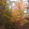 Colors of Autumn along Auger Hole Road<br /> Gorges State Park, NC