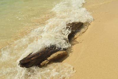 Driftwood on Playa Blanca on Baru Island