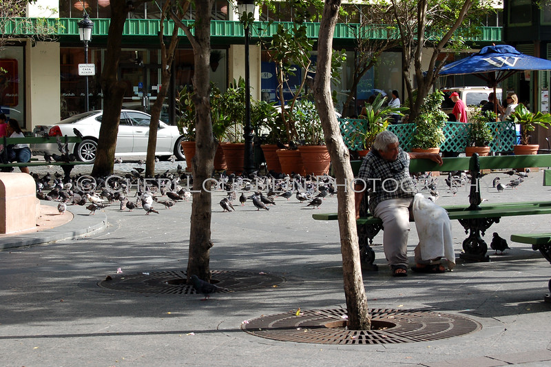 Pigeons Everywhere