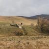 Ruinas en la ruta de regreso a Edimburgo. Otro paisaje increible.