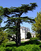 The castle as viewed from a Lebanese cypress tree.