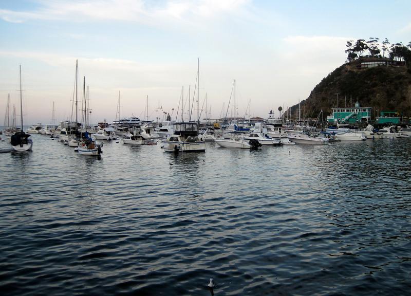 Avalon Harbor at dusk