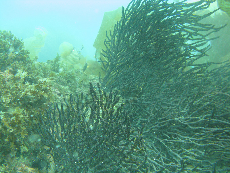 More soft coral sea fans.