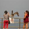 Marissa tries to get a close up shot of a pelican.