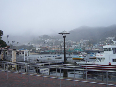 A foggy day in Avalon.