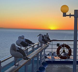 Seagulls enjoy the Sunrise