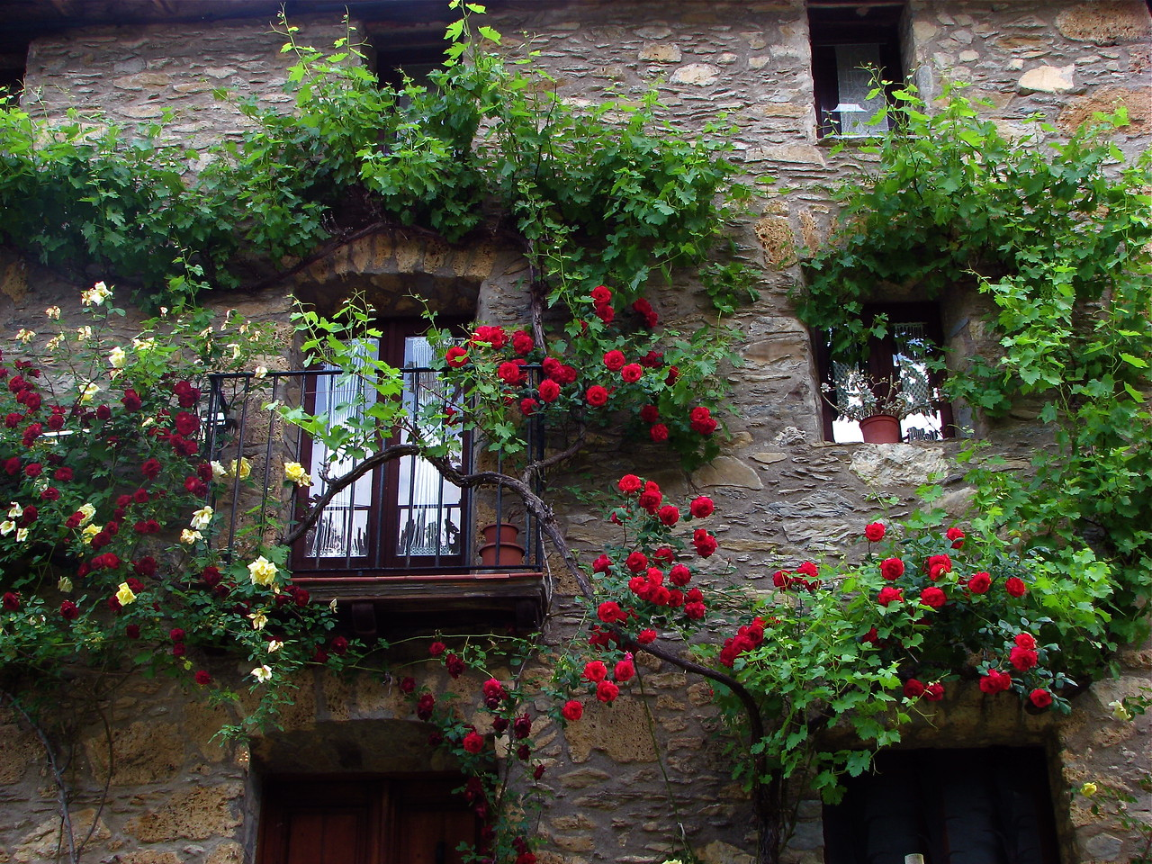They sure know how to grow roses.  This is the wall of a house in the charming little town of Beget, Alta Garrotxa, Catalonia, Spain.