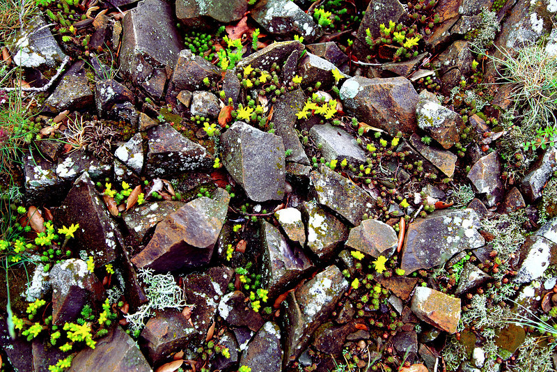 Flowers and lichens among the rocks in an alpine clearing, Parc Natural Montseny, Catalonia, Spain.