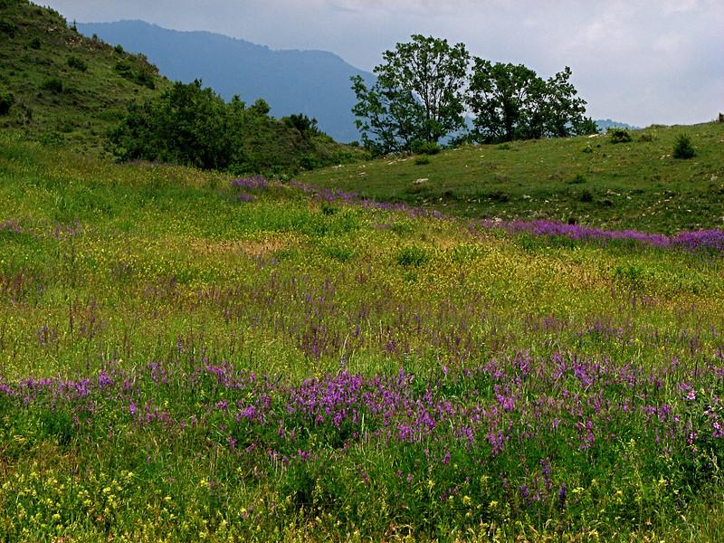 Meadow in the hills near Ripoli, Catalonia, Spain.
