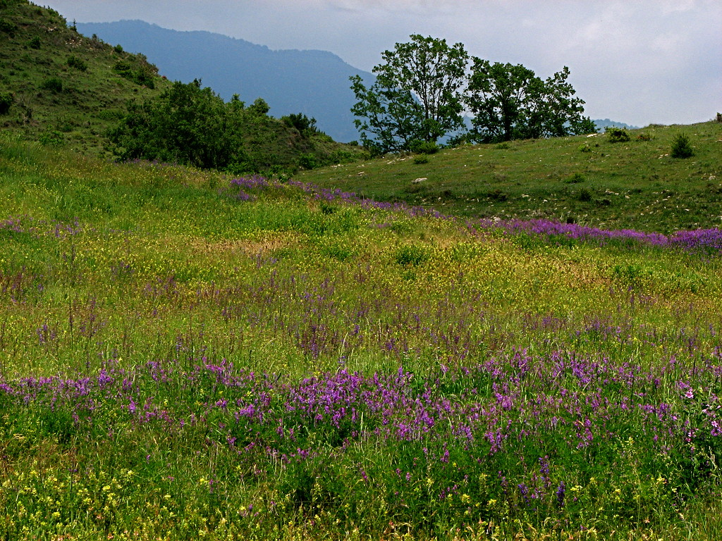 Meadow in the hills near Ripoli, Catalonia, Spain.