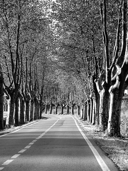 Trees lining a country road near Vic, Catalonia, Spain