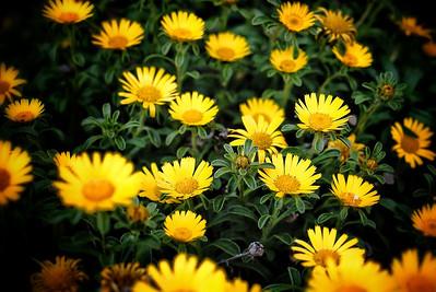 Flowerbed in Peratallada