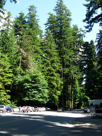 Cathedral Grove - Jul 11