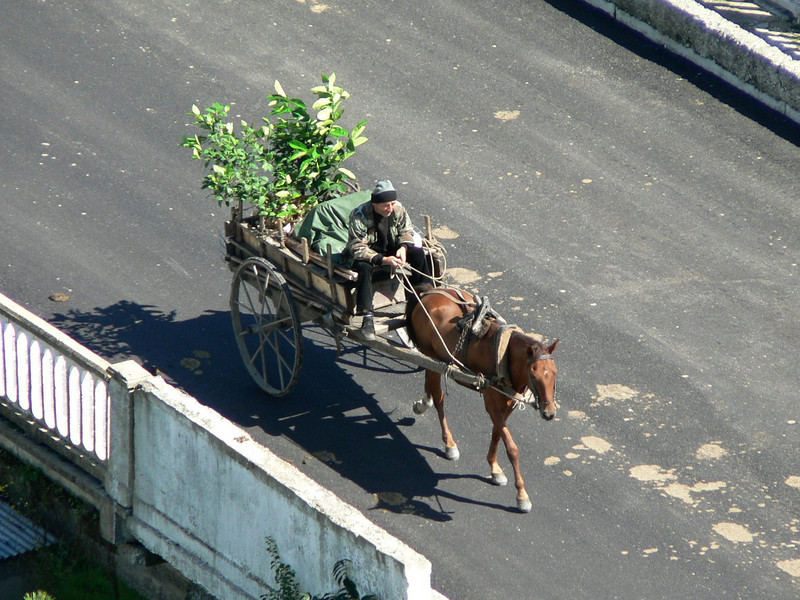 Local transport seen from Gremi