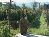 Napareulis Marani winery