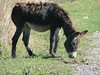 A donkey outside Alaverdi