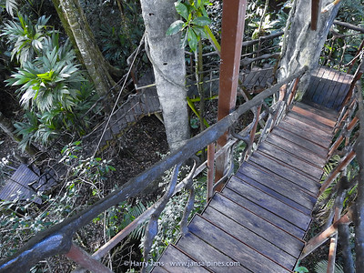 stairs to Tree House at Maquenque Ecolodge