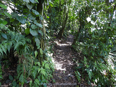 jungle path at Maquenque Ecolodge