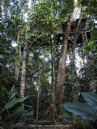 Tree House at Maquenque Ecolodge (55 steps!)