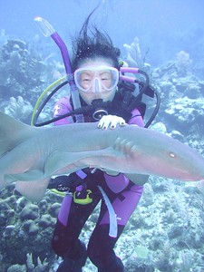 Playing with sharks
