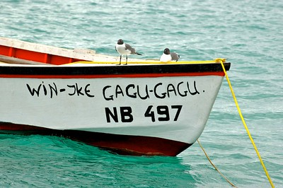 Gagu Gagu birds on their Gagu Gagu boat
