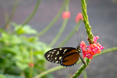Beautiful Costa Rica flowers + butterfly