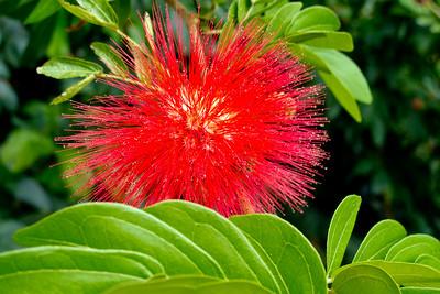 Beautiful Costa Rica flowers