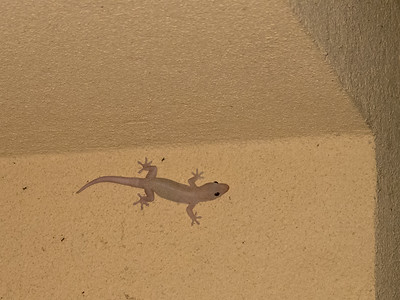 The next night, it was this cute little gecko, above our door.