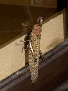 How does he still stick to the glass? This guy was originally seen at the door to rm 1.