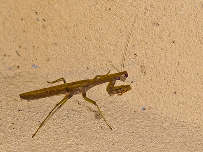 Here he's on the stucco above our door