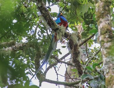 Resplendent Quetzal © David Larson