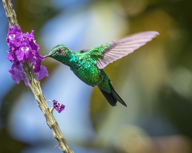 Garden Emerald (m)