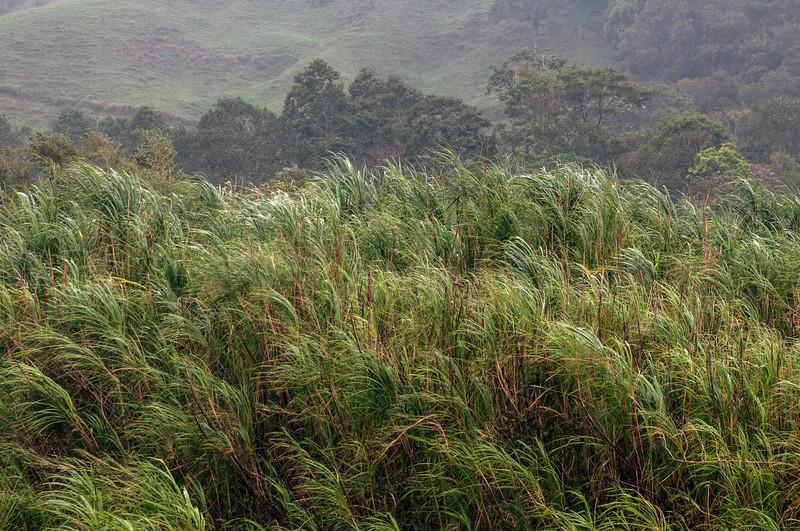 Misty grass