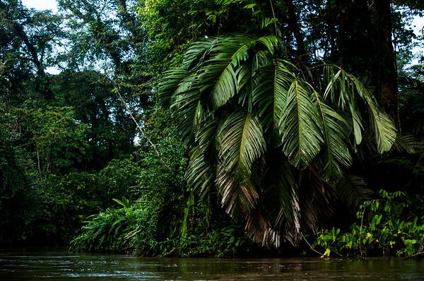 Lush rainforest along the river