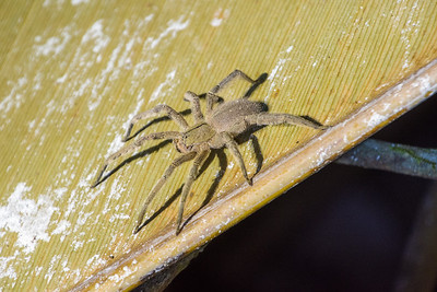 Highly poisonous baby spider