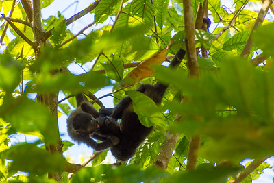 Youngsters monkeying around