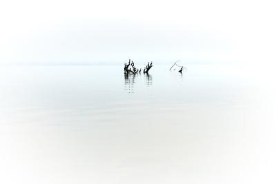 Cormorants ... Lake Atitlan ... Guatemala