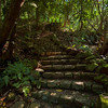 Stone Staircase in the jungle