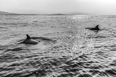 Dolphins, Zicatela Beach, Mexico