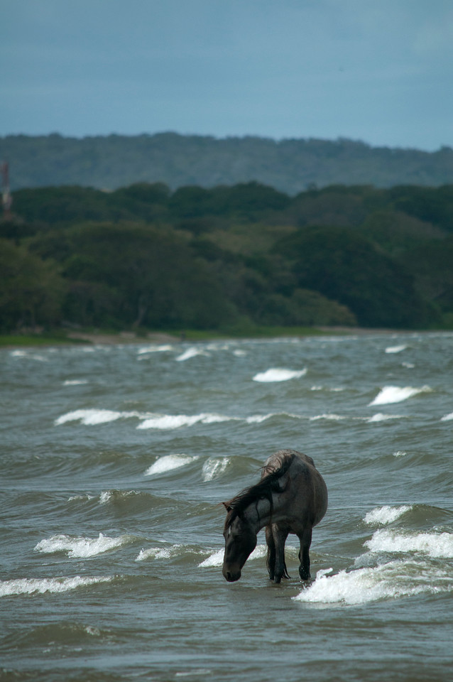 Horse in the lake