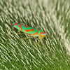 Leafhopper, by Peter Hollinger