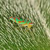 Leafhopper, by Peter Hollinger