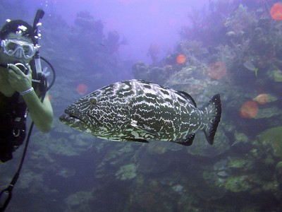 Grouper that thinks it's a dog
