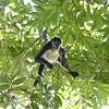 Monkeying around at Tikal, Gautemala