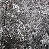 Bishkek's Oak Park in winter.